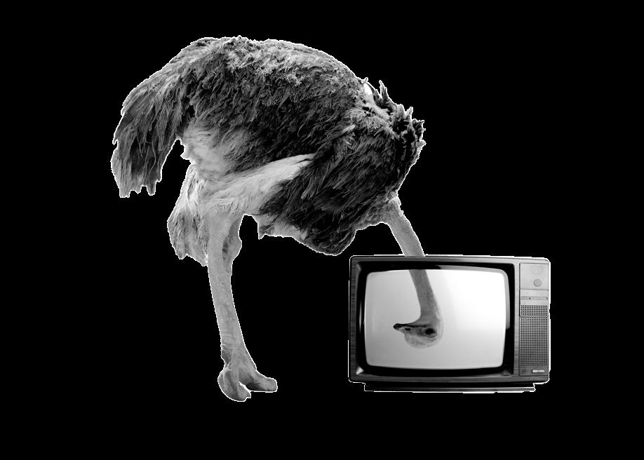 An ostrich looking through a television
